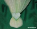 Τούλινη μπομπονιέρα με καρδιά πορσελάνινη χειροποίητη σε λά...