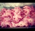 Ροζ αστερίας και δελφίνι μαξιλαράκια