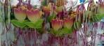 Πολύχρωμα κεραμικά λουλούδια τουλίπες
